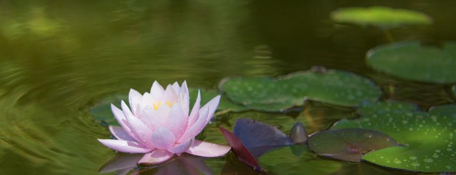 Многогранная духовность